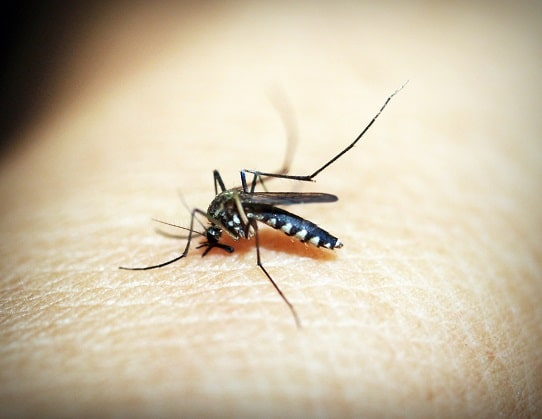 Employer Safety Tips for Mosquito Borne Disease in MA